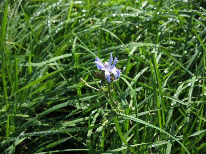Eine Blume in einem Grasfeld